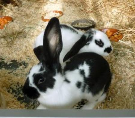Partnersuche kaninchen